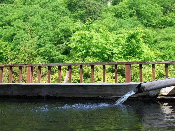 初夏は美しい新緑を眺めながら露天風呂でのんびり♪ 初夏は美しい新緑を眺めながら露天風呂でのんびり